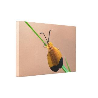 Canvas Wrap: Net Winged Beetle Canvas Print