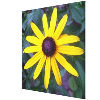 Canvas - Wrapped - Black-Eyed Susan Stretched Canvas Print