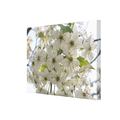 Canvas - Wrapped - Blooming Bradford Pear Canvas Print
