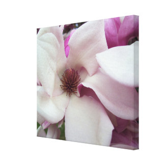 Canvas - Wrapped - Saucer Magnolia Bloom