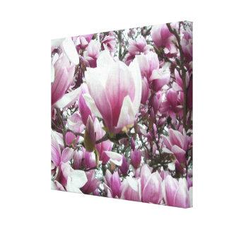 Canvas - Wrapped - Saucer Magnolia l