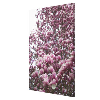 Canvas - Wrapped - Saucer Magnolia ll