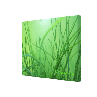 CanvasArt-GrassOnGreen#1.© Roseanne Pears 2012. Stretched Canvas Print