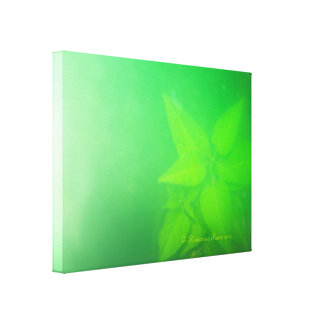 CanvasArt-LimePlant.© Roseanne Pears 2012. Canvas Prints