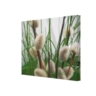 CanvasArt-PussyWillowsInGrass© Roseanne Pears 2012 Stretched Canvas Print