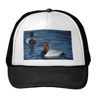 Canvasback drake mesh hat