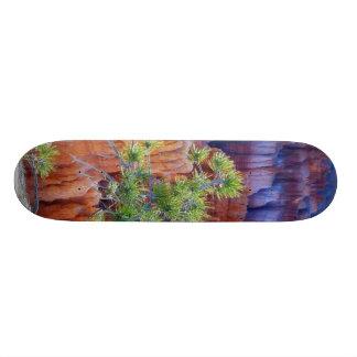 Canyon Tree Skateboards
