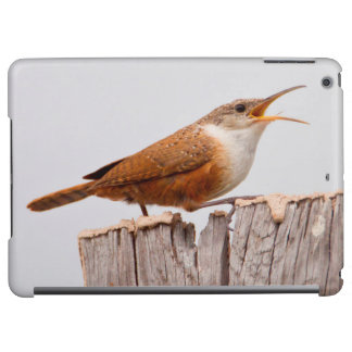 Canyon Wren (Catherpes Mexicanus) Singing iPad Air Cover