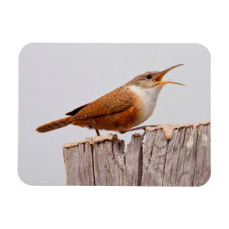 Canyon Wren (Catherpes Mexicanus) Singing Rectangular Photo Magnet