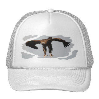 Cap Monk Vulture - Photography Jean Louis Glineur