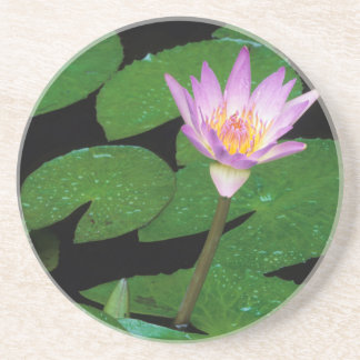 Cape Blue Water Lily (Nymphaea Capensis) Coaster