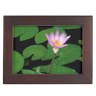Cape Blue Water Lily (Nymphaea Capensis) Keepsake Box