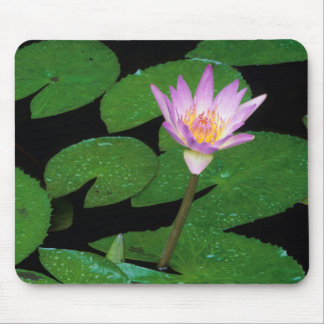 Cape Blue Water Lily (Nymphaea Capensis) Mouse Pad