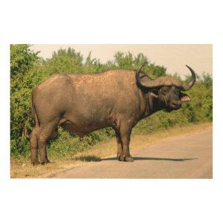 Cape Buffalo, Addo Elephant National Park Wood Wall Art