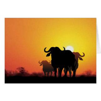 Cape Buffalo Card