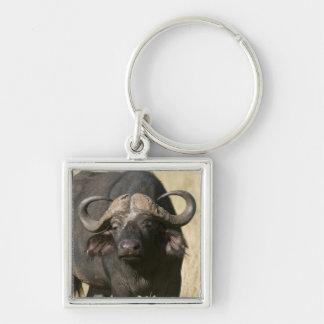 Cape Buffalo (Syncerus caffer), Masai Mara Key Ring