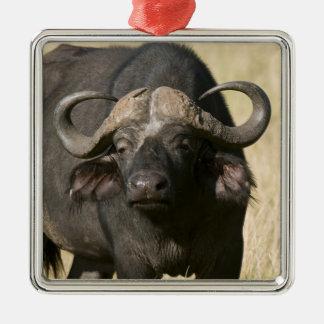 Cape Buffalo (Syncerus caffer), Masai Mara Silver-Colored Square Decoration