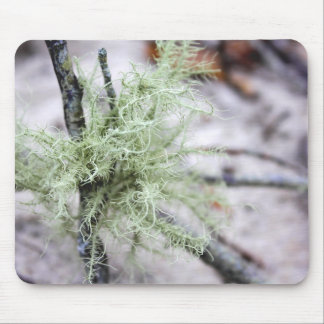Cape Cod Beach Mossy Branch Photo Mouse Pad