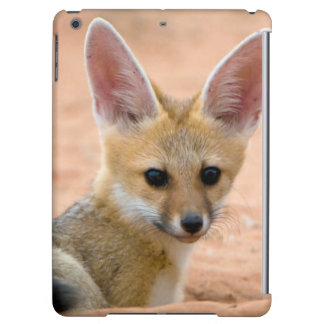 Cape Fox (Vulpes Chama) Pup Peers Inquisitively