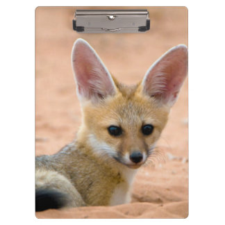 Cape Fox (Vulpes Chama) Pup Peers Inquisitively Clipboard