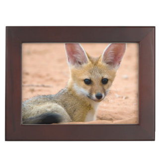 Cape Fox (Vulpes Chama) Pup Peers Inquisitively Keepsake Box