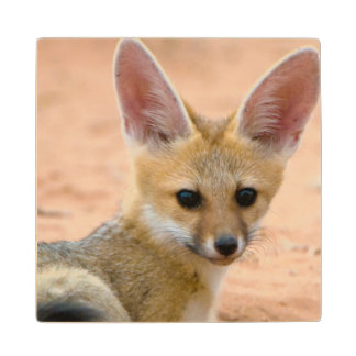 Cape Fox (Vulpes Chama) Pup Peers Inquisitively Wood Coaster