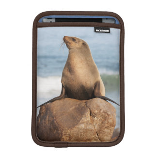 Cape Fur Seal resting on a rock iPad Mini Sleeve