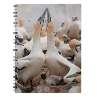 Cape Gannet pair fencing Notebooks