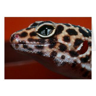 Cape Gecko (Pachydactylus Capensis) Profile Card