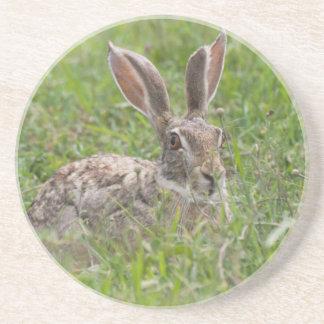 Cape Hare, Ngorongoro Conservation Area, Arusha Coaster