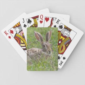 Cape Hare, Ngorongoro Conservation Area, Arusha Playing Cards