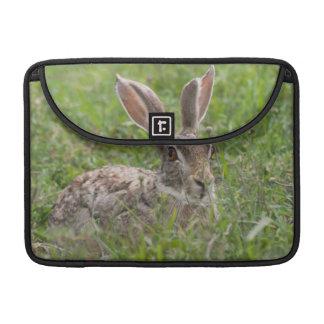 Cape Hare, Ngorongoro Conservation Area, Arusha Sleeve For MacBook Pro