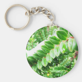 Cape Horn, Chile 5 Basic Round Button Key Ring