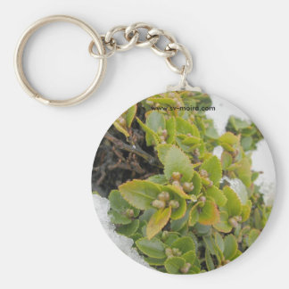 Cape Horn, Chile Nothofagus Coihue 2 Basic Round Button Key Ring