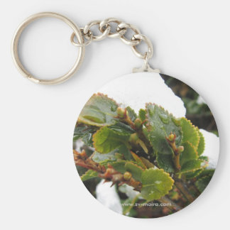 Cape Horn, Chile Nothofagus Coihue Basic Round Button Key Ring