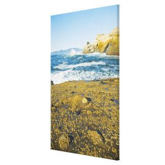 Cape Kiwanda And The Pacific Ocean 2 Canvas Print