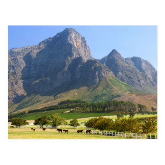 Cape Town, Western Cape, South Africa Postcard
