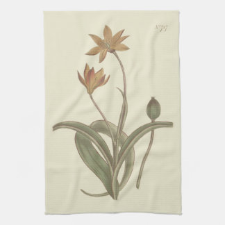 Cape Tulip Botanical Illustration Tea Towel