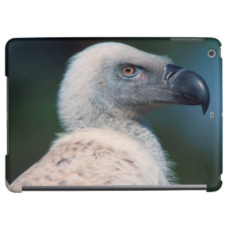 Cape Vulture (Gyps Coprotheres) Profile