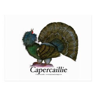 Capercaillie bird, tony fernandes postcard