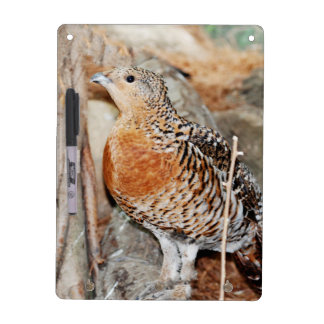 Capercaillie Dry Erase Board