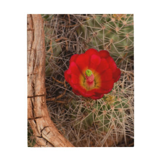 Capitol Reef National Park, Claret Cup Cactus Wood Wall Decor