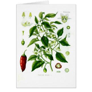 Capsicum annuum (cayenne pepper) greeting card