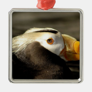 Captive Crested Puffin, Alaska Sealife Center, Christmas Ornament