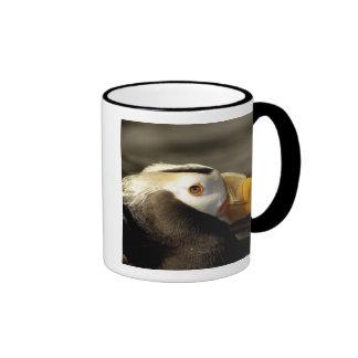 Captive Crested Puffin, Alaska Sealife Center, Coffee Mug