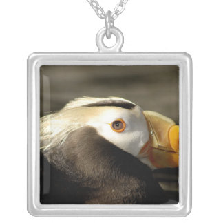 Captive Crested Puffin, Alaska Sealife Center, Silver Plated Necklace