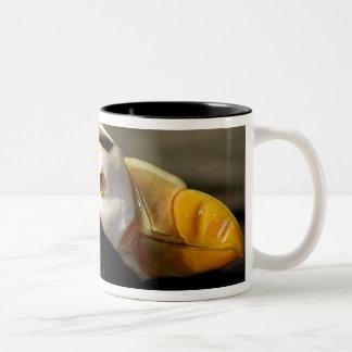 Captive Crested Puffin, Alaska Sealife Center, Two-Tone Coffee Mug