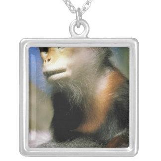 Captive douc langur, or pygathrix nemaeus silver plated necklace