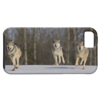 Captive, Duluth, Minnesota, USA 2 iPhone 5 Covers