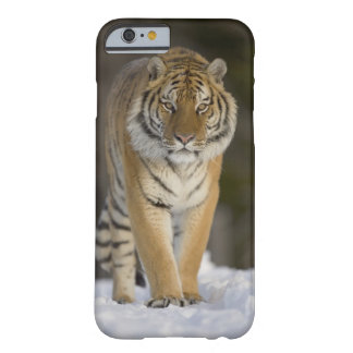 Captive, Duluth, Minnesota, USA Barely There iPhone 6 Case